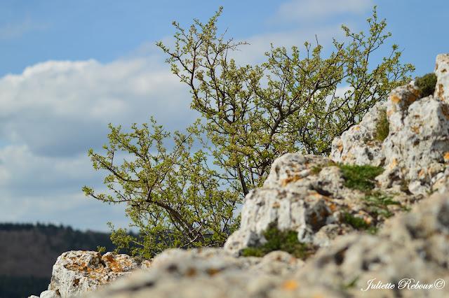 Randonnée à la roche de Solutré