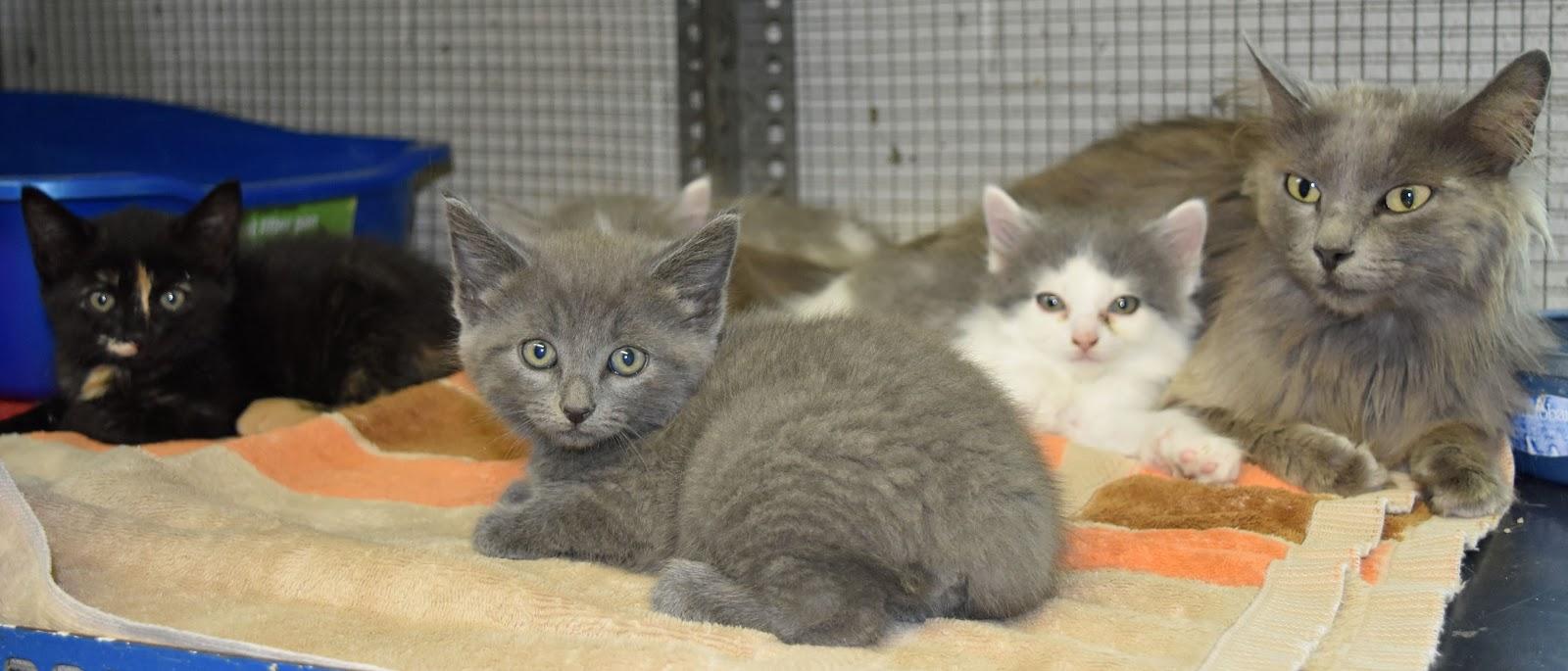 Crittenden County Animal Shelter