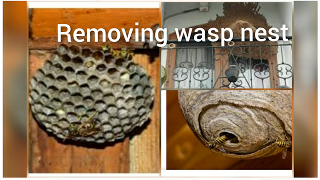 removing wasp nest
