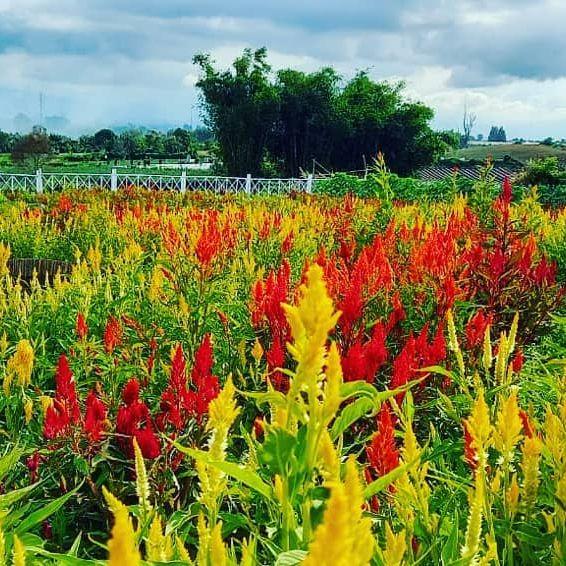 Taman Seribu Bunga Medan Berastagi