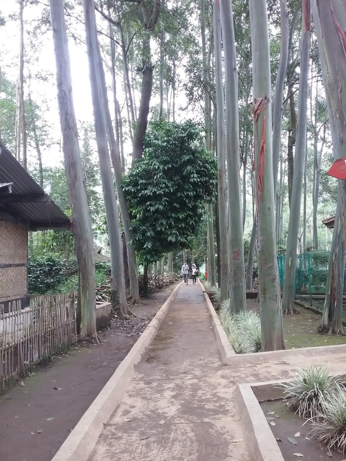 Situ Cisanti - Hulu Sungai Citarum Yang Mempesona - Cloud ...