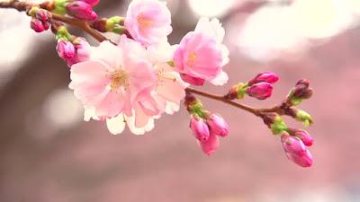 voir-renaître-les-fleurs-endormies-a-l-arrivee-du-printemps