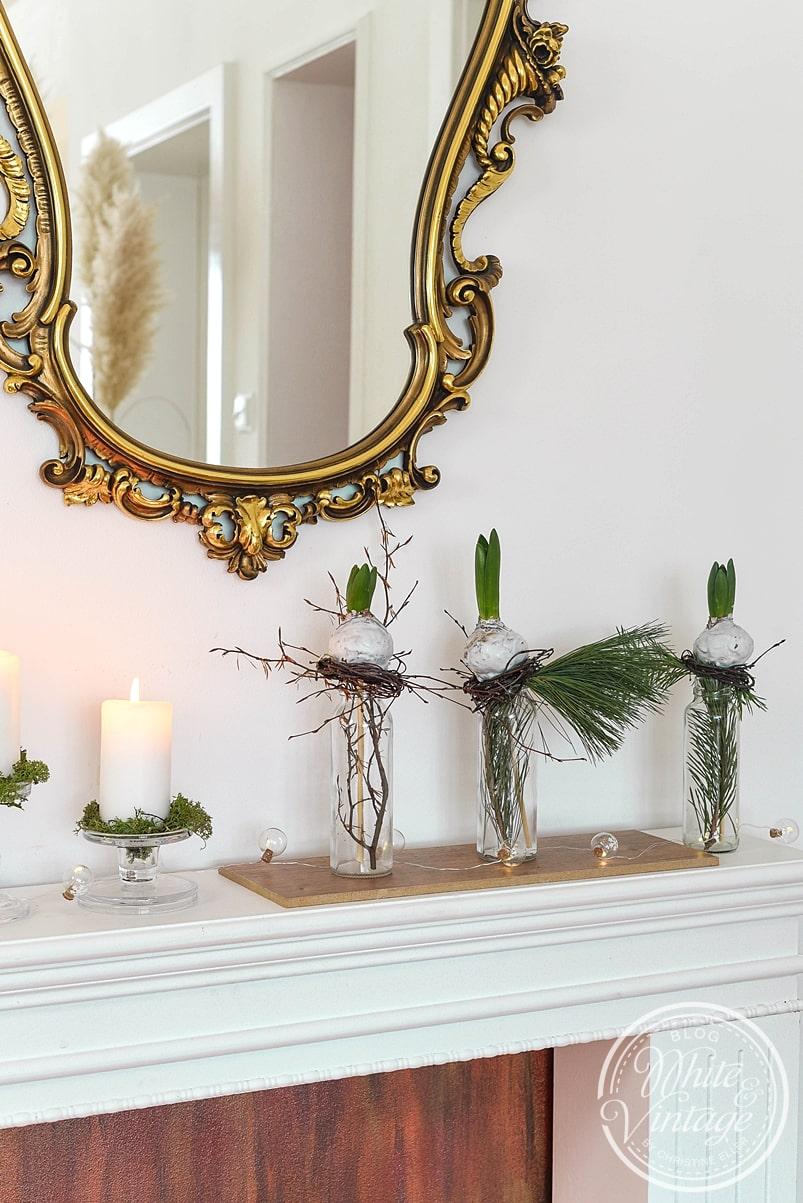 Hyazinthe wachsen - Dekoidee für den Winter