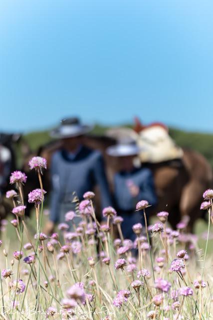 Clavellinas rosas en primer plano y en el fondo los jinetes llevando a sus caballos en Doñana