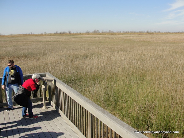 observation deck at Sabine National Wildlife Refuge Wetland Walkway in Louisiana