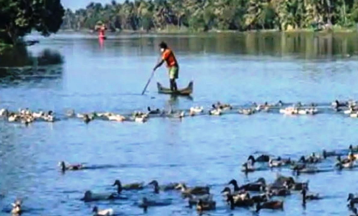 Bird flu declared disaster in Kerala, 14 states including UP Haryana on alert