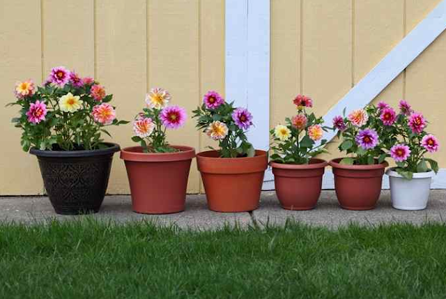 Planting Flowers In Pots For Beginners