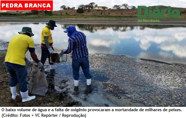 Seca provoca morte de milhares de peixes em açude no Ceará