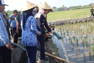 http://www.topfm951.net/2019/07/kekeringan-landa-14-kecamatan-di-brebes.html#more