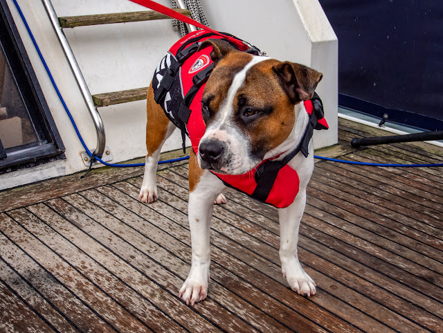 Photo of Ruby in her new lifejacket