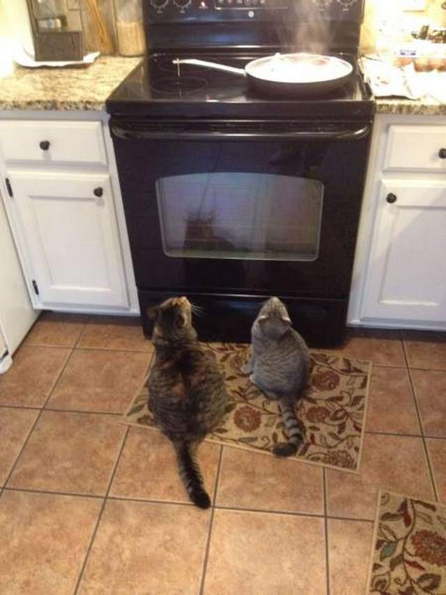 Funny cats - part 233, funny cat images, best cat images, cat photo, adorable cat