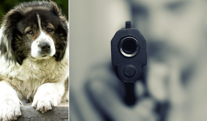 Pedofil helyett egy kutyát lőtt le az amerikai rendőr
