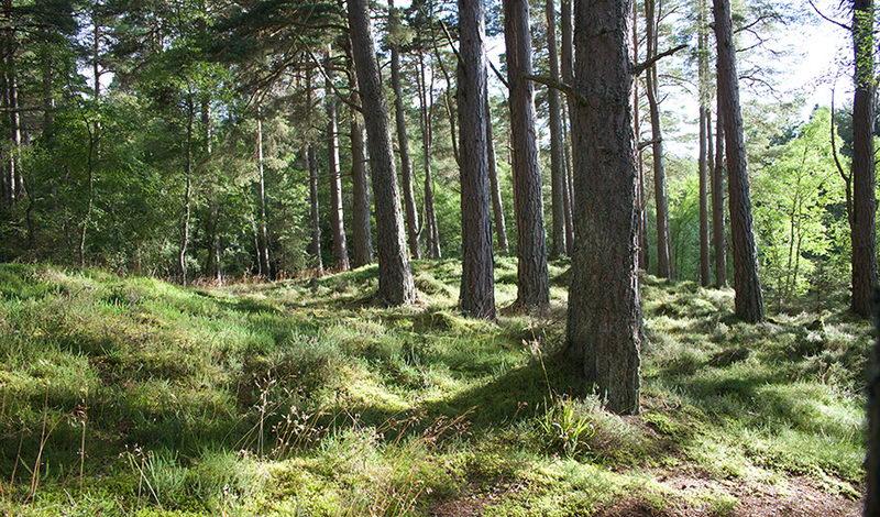 Απαράδεκτη οπισθοδρόμηση για την προστασία της δασικής γης