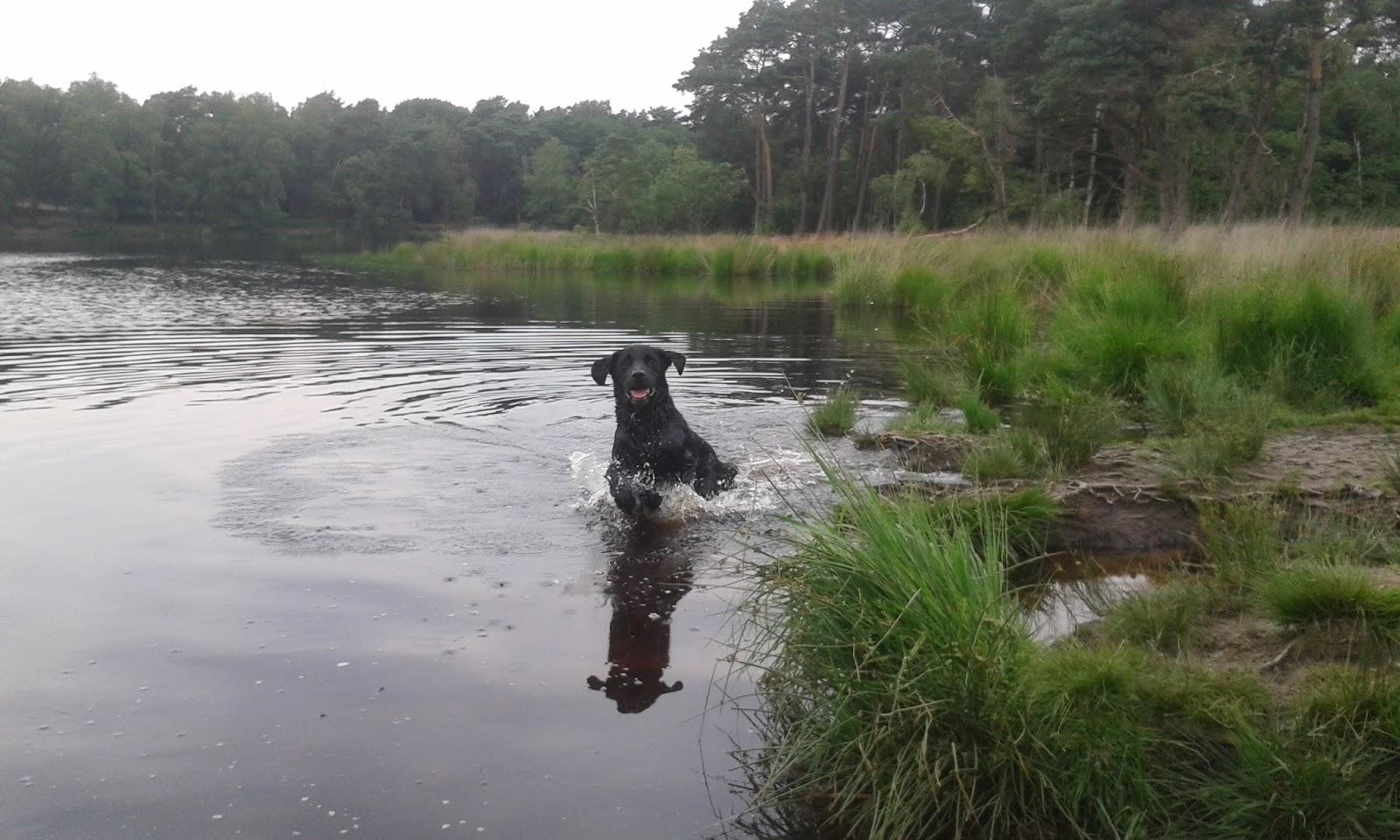 Blij springende Freaser staat tot zijn buik in het water