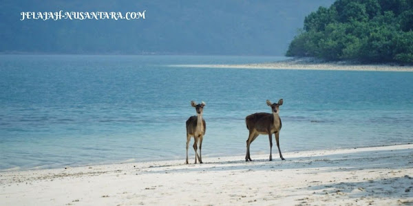 aktivitas selama wisata open trip pulau peucang ujung kulon 3 hari 2 malam