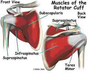 Tom S Physiotherapy Blog Preventing Rotator Cuff Injuries