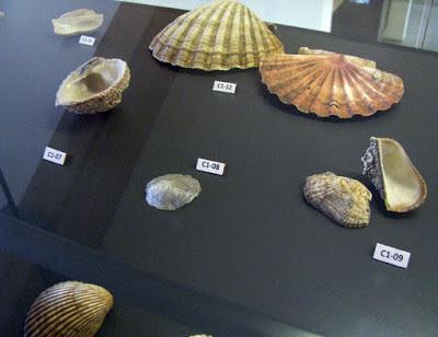 Coleção de conchas expostas no Centro Interpretativo da Afurada