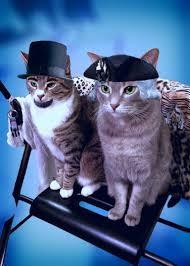 Hari Kucing Nasional di Amerika