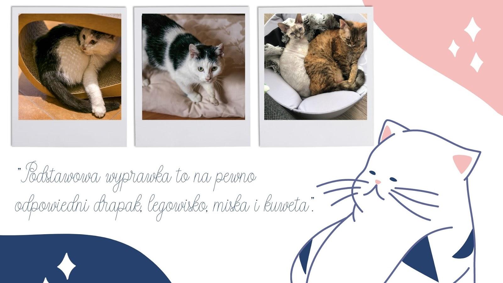 7 jaki drapak jaka poduszka jakie legowisko dla kota gdzie kupić wygodne tanie legowisko naturalne eko dla kota