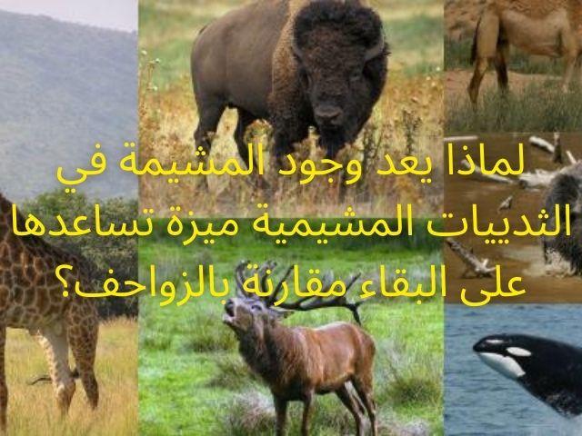 لماذا يعد وجود المشيمة في الثدييات المشيمية ميزة تساعدها على البقاء مقارنة بالزواحف؟