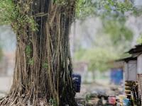 7 Tanaman Pencegah Banjir, Mulai dari Porang Hingga Bambu