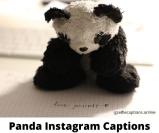 Panda Instagram Captions