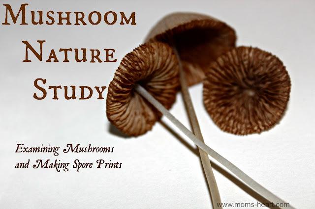 Mushroom Nature Study