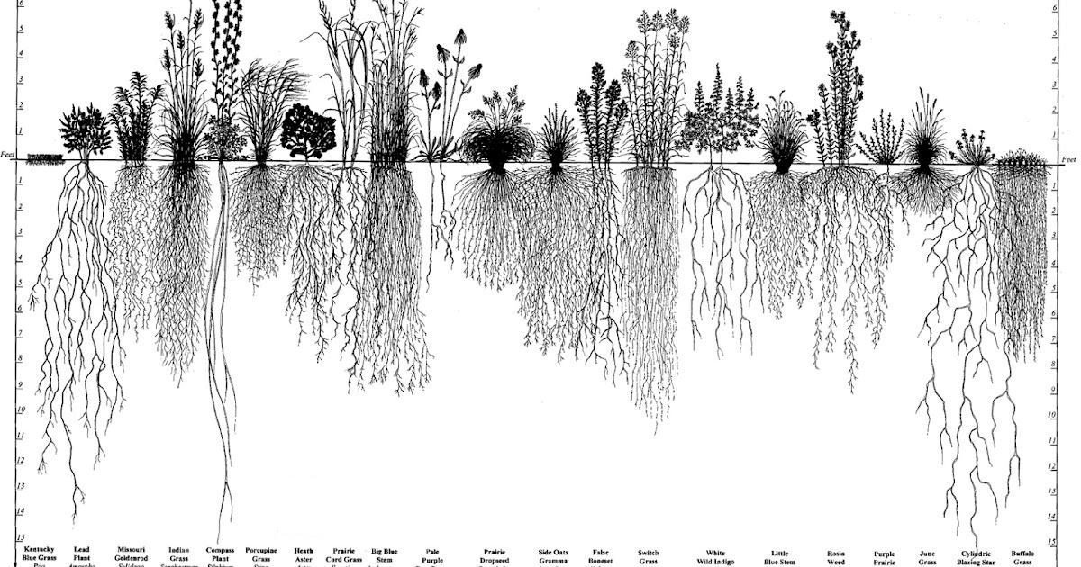 Plantas%2by%2barbustos%2bde%2bla%2bpradera%2bamericana.%2bimagen%2bfuente%2bdesconocida