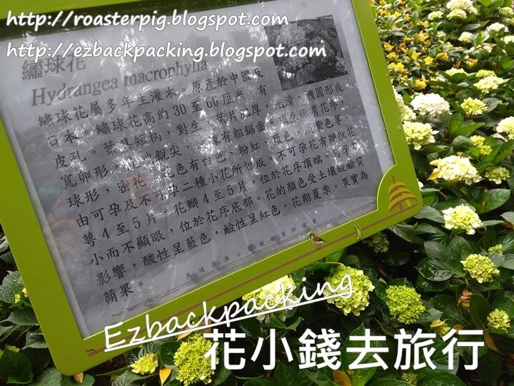 大埔海濱公園繡球花