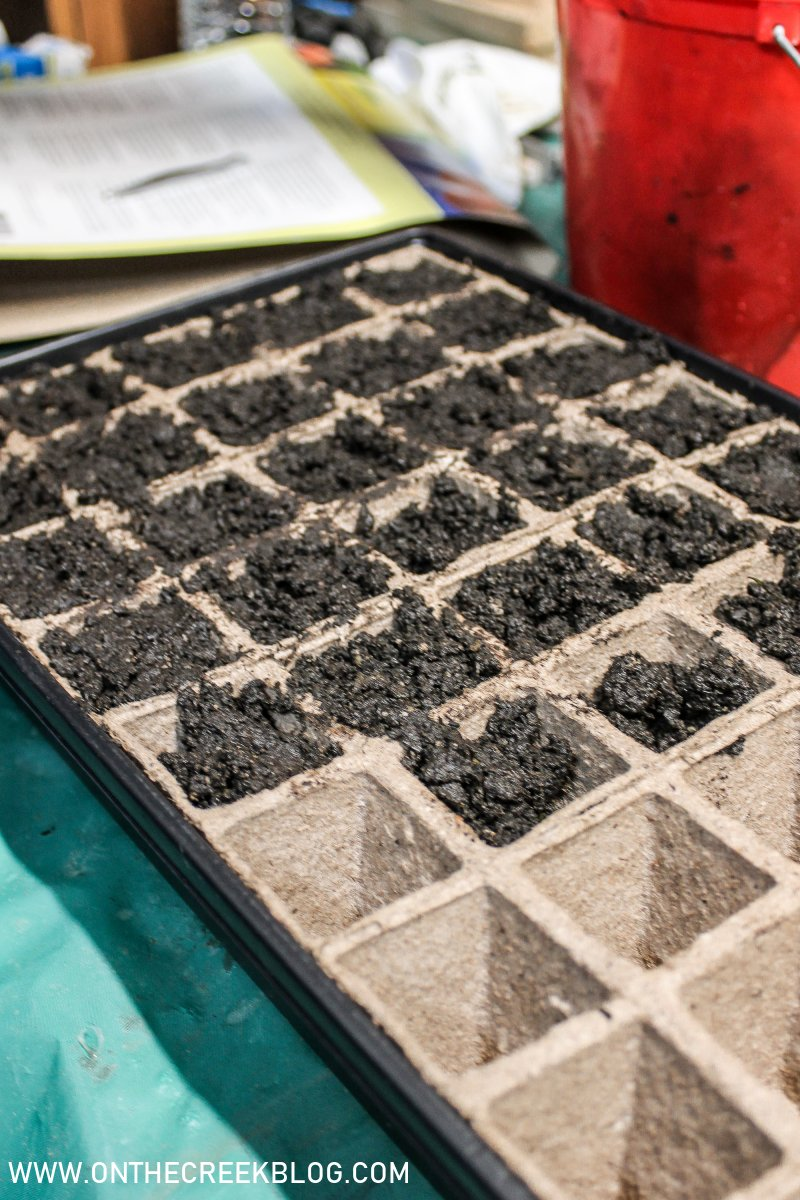 Seed starting for the garden | On The Creek Blog