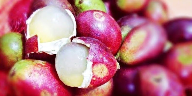 manfaat buah matoa untuk diet