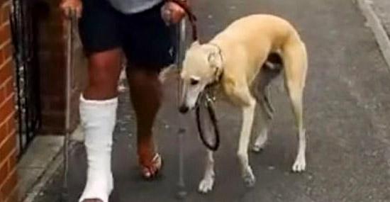 Cachorro que Manca imitando o dono faz sucesso na internet - Capa