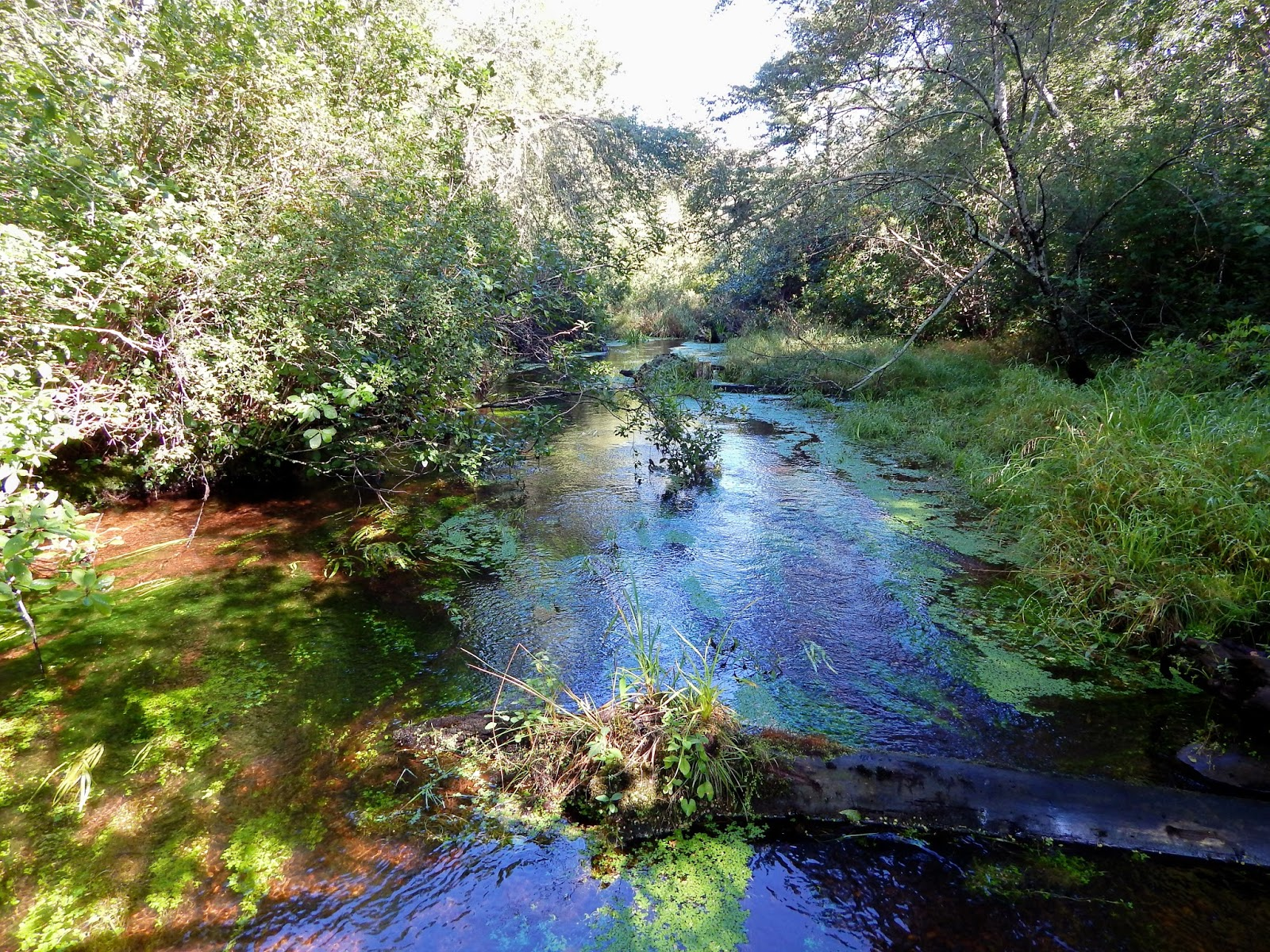 small stream reflections red brook september 2015