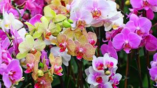 toko bunga bekasi- toko bunga di bekasi- toko bunga murah di bekasi- toko bunga murah kota bekasi- handbuket- hanbuket bekasi- hanbuket murah bekasi- handbuket bekasi barat- handbuket bekasi selatan- hanbuket tambung- handbuket cikarang- toko bunga cikarang- toko bunga jatiasih- toko bunga cikunir- toko bunga jatikramat
