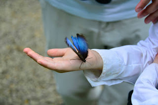 Kid Holding a blue morpho butterfly