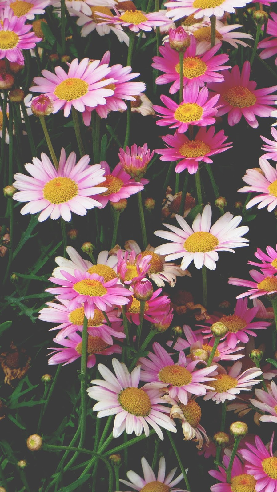 Vintage colorful chamomile
