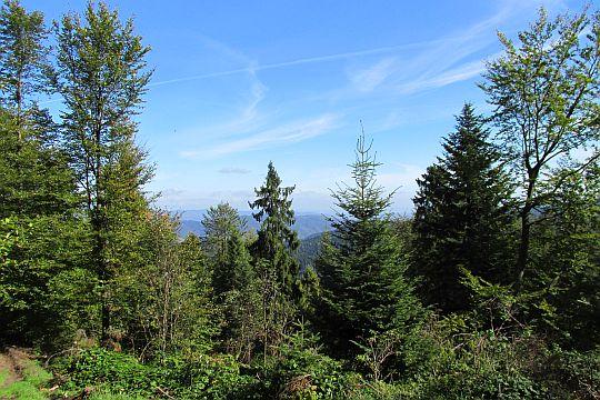 Na początku drzewa przez większość czasu zasłaniają widoki.