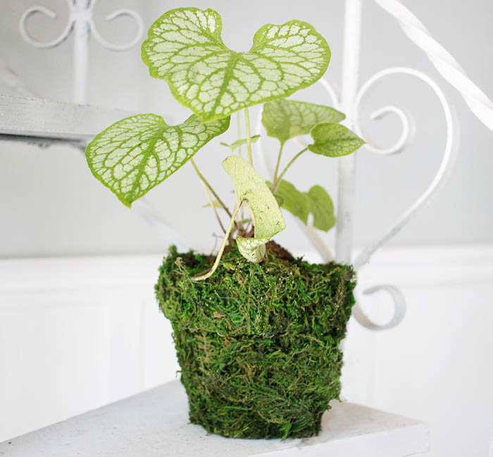 DIY Moss Covered Flower Pot