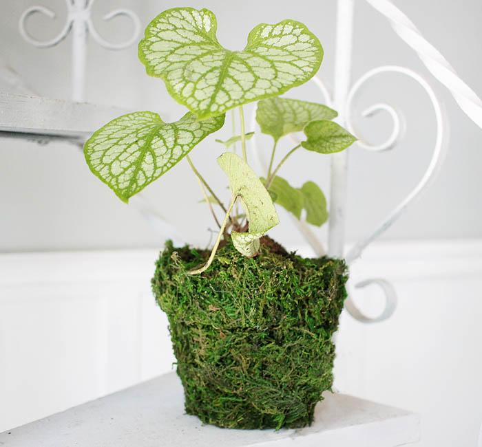 DIY Moss Covered Flower Pot