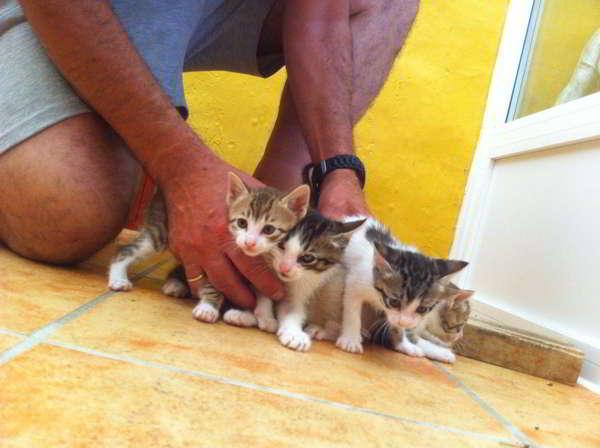 gatitos en adopción 2