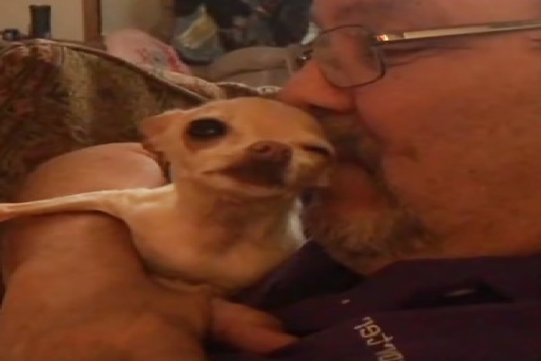 When Daddy Provides Her Kisses, Chihuahua Is In Paradise
