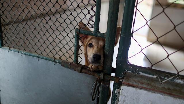 Fanatici del Covid uccidono i cani in Australia