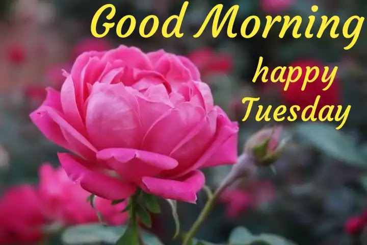 Good morning Tuesday wishes images photos pics HD