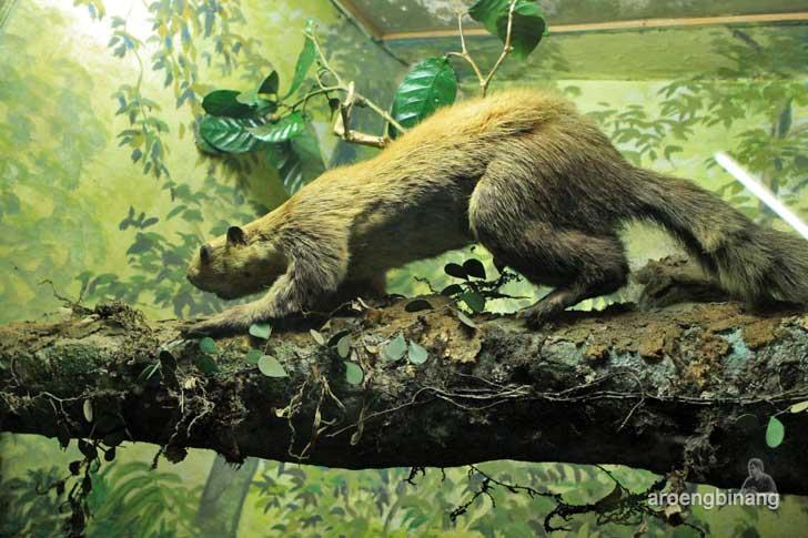 garangan museum zoologi bogor