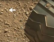 Humanoid Thumb Found On Mars?