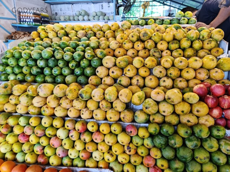 various varieties of Indian mangoes