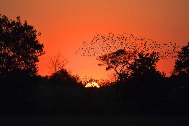 pourquoi-les-animaux-migrent-ils