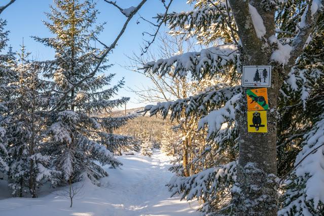 Winterwandern Mauth-Finsterau  Reschbachklause – Siebensteinkopf  Nationalpark Bayerischer Wald 13