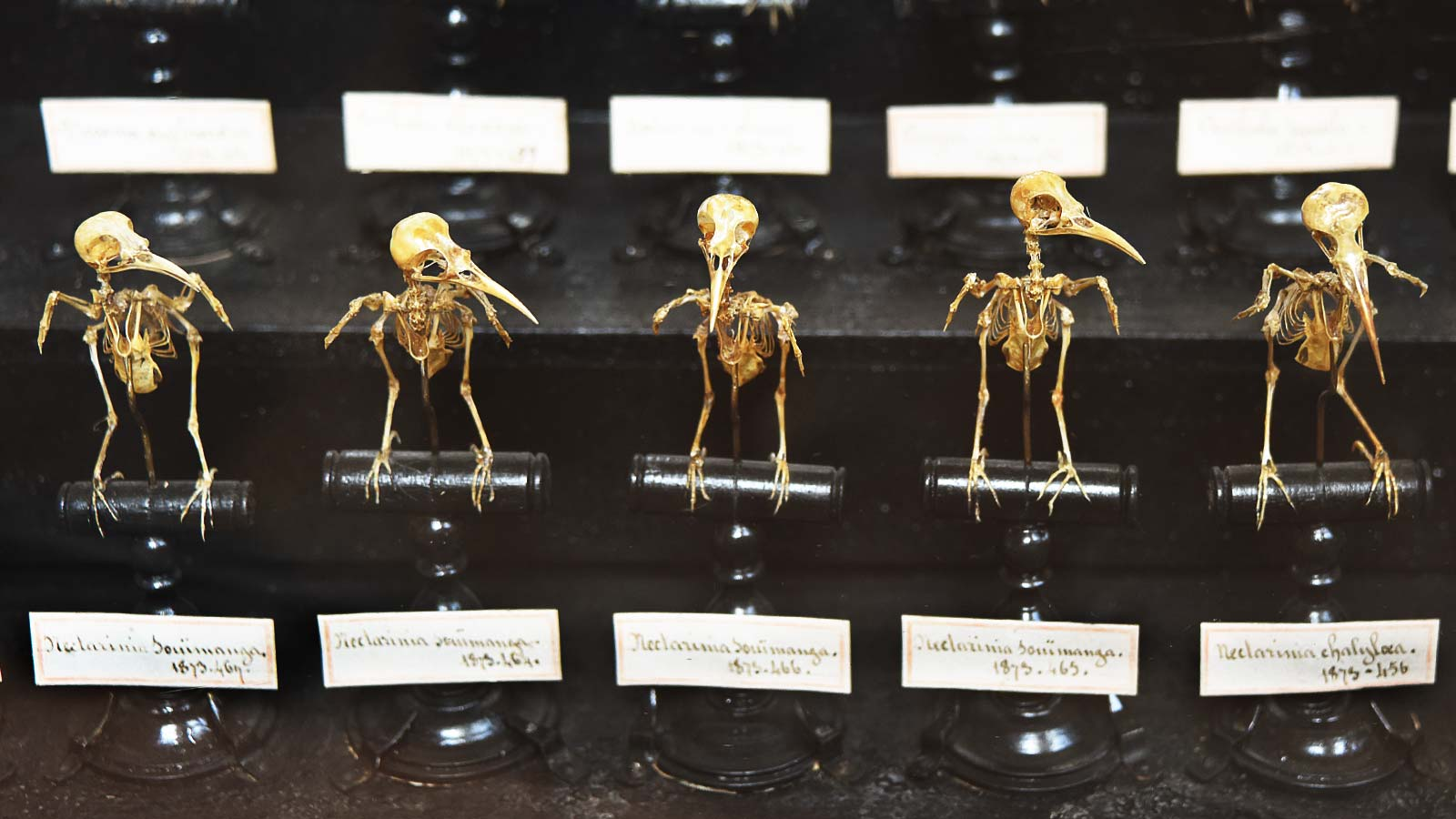 Bird Skeletons at the Paris Museum of Natural History