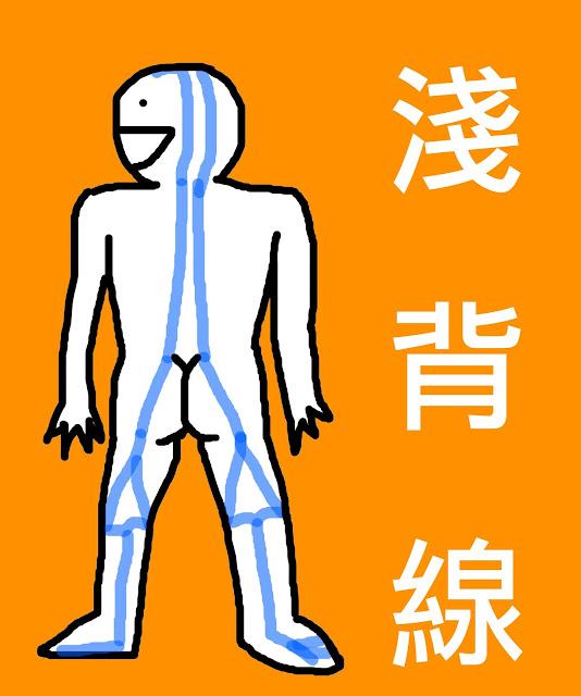 好痛痛 解剖列車 淺背線 筋膜 足底筋膜 阿基里斯腱 膕旁肌 豎脊肌